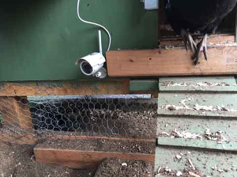 Why you need a chicken coop camera - DIY Coop Builder
