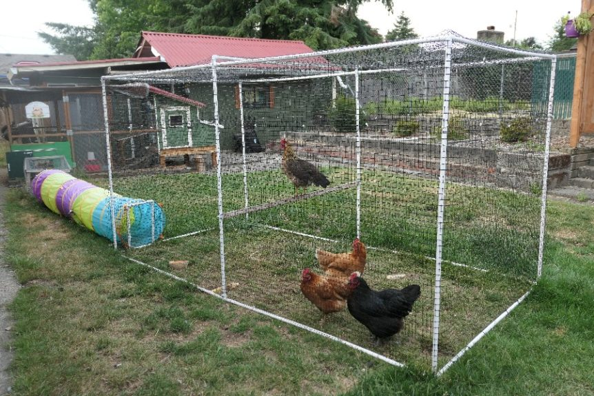 How to build a portable PVC pipe chicken run - DIY Coop Builder